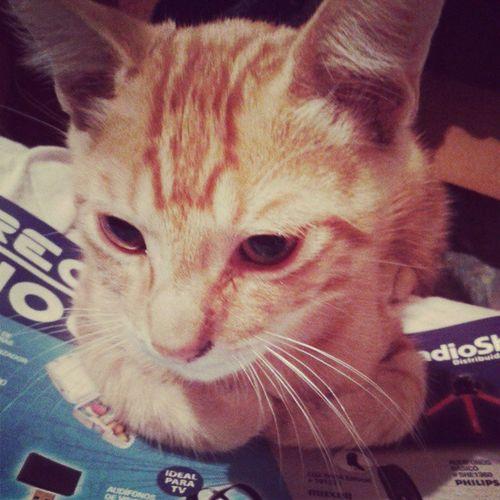 El micho xtraña a Nico Cat Insta_cat Instapet Animalpet igersperu mascotasperu