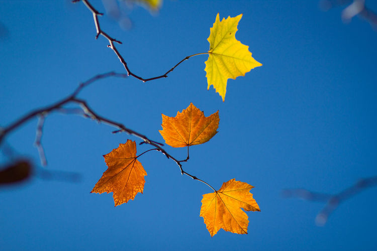 Branch Tree Leaf Blue Autumn Multi Colored Rural Scene Change Beauty Sky