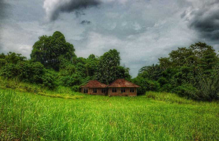 The house that stood abandoned, alone Abandoned Places Bali Campuhan Ridge Walk Derelict Building EyeEm EyeEm Best Edits EyeEm Best Shots EyeEm Gallery Green Grass Landscapes Softness Stunning Place The Great Outdoors - 2016 EyeEm Awards Trees And Nature Ubud, Bali