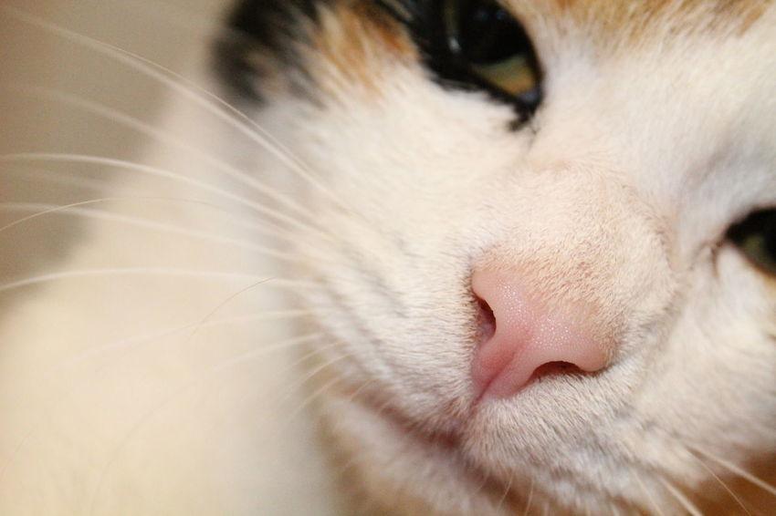 Cat Cat Nose Nose Neko Meow Macro Macro_collection Macro Photography Gatto Naso Cats Animal Animals Animal_collection Domestic Animals Domestic Cat Animal Photography
