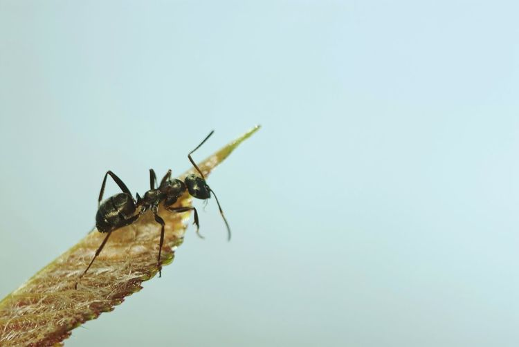 Close-up of insect against clear sky