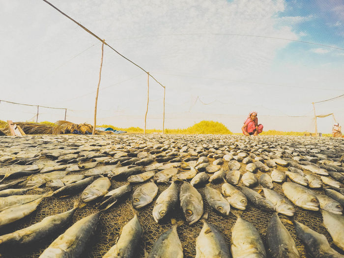 Full length of woman drying fish on field