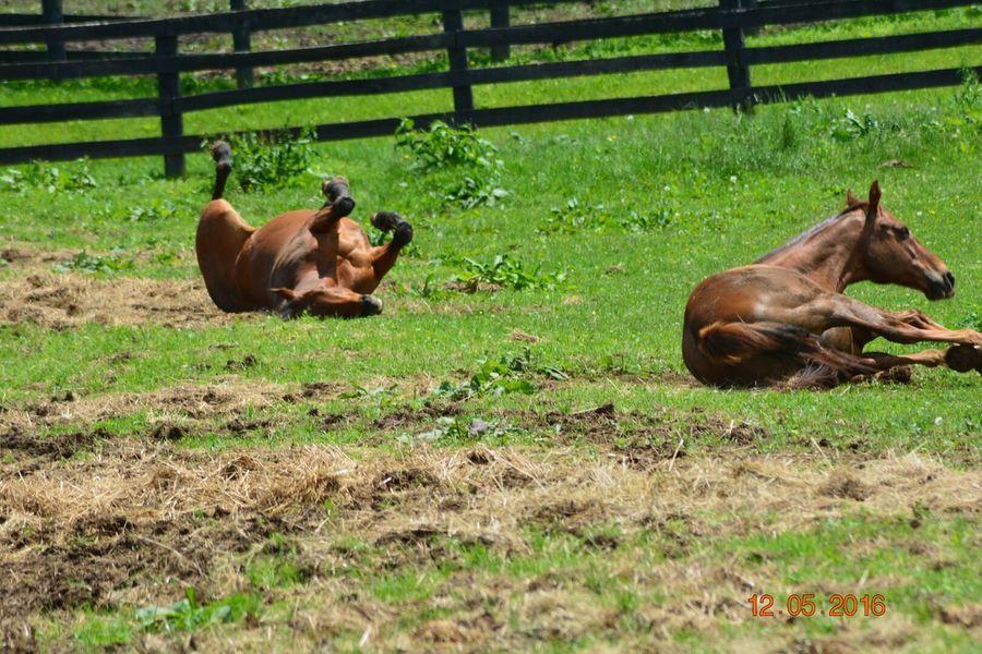 Playtime Horselife Horse Love Horse Photography  Horselove Horse <3 Horse Life Horses Horse Kentucky  Beautiful 2016 EyeEm Awards