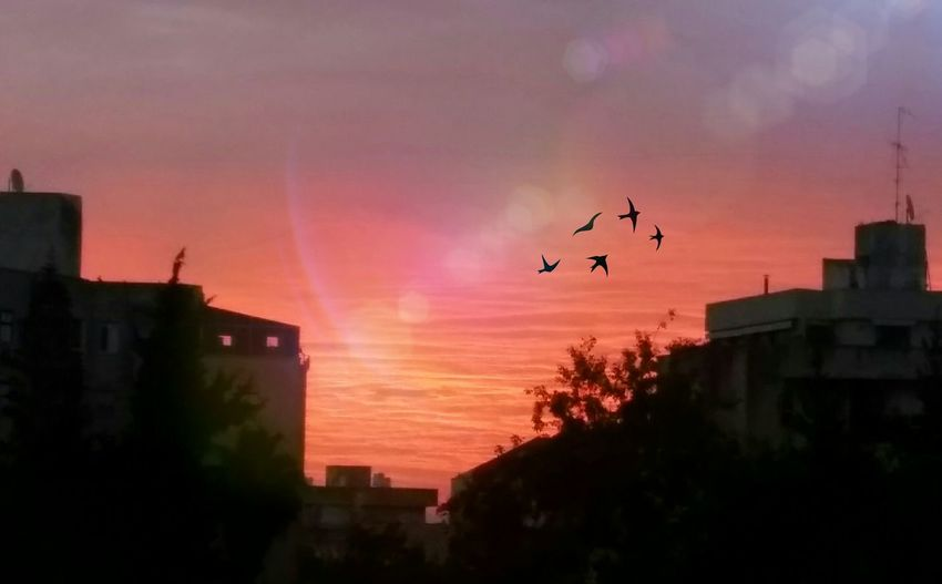 Today's Dawn Was so beautiful! But faded in 10 min. And Shades Of Grey took over. Urban Skyline Edited My Way Atmospheric Mood Pink Skys Cityscape Silhoutte Enjoy The New Normal Cool Breeze Naturelovers EyeEm Nature Lover
