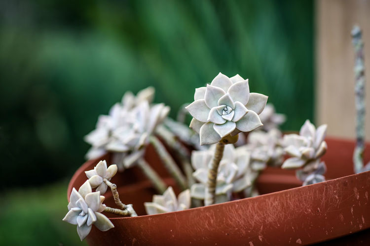 Succulents Plants South Africa Succulents Close-up Day Focus On Foreground Garden Nature No People Plantpot