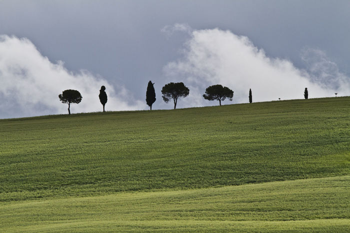 Clouds Cloudy Sky Field Horizon Over Land Landscape Non-urban Scene Outdoors Sky Trees Trees In A Row Tuscany Countryside Landscapes With WhiteWall Perspectives On Nature