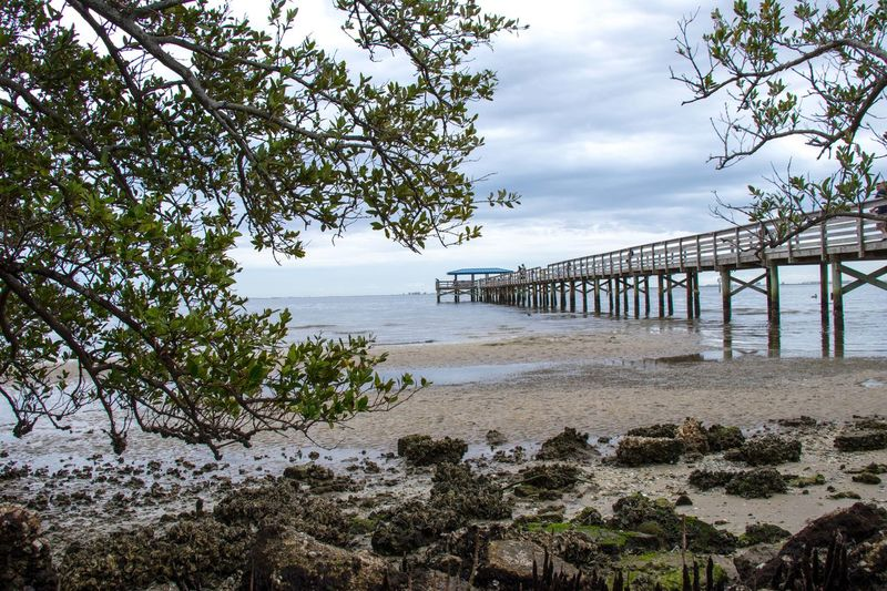 Low Tide Safety Harbor Pier Cloudy Day Pier Architecture Built Structure Cloud - Sky Horizon Over Water Outdoors Rocks Sand & Sea Scenics Tree