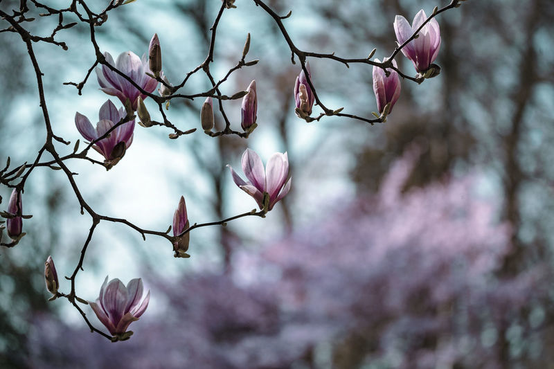 ©️866 spring.