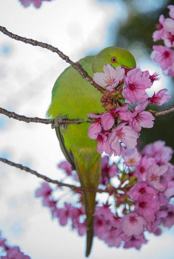 Bird Photography Green Color Japan Photography Nature Bird Good Smell