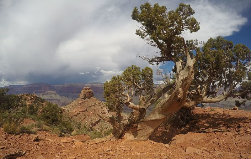 Amazing View Animated Arizona Canyon Day Dry Hot Forground Grand Canyon Landscape Natural Expression Nature Natures Timlessnes No People Openmind Space Openspace Sculpture Sculpture In Nature Sky Strorm Approaching Time Tree Twisted Tree