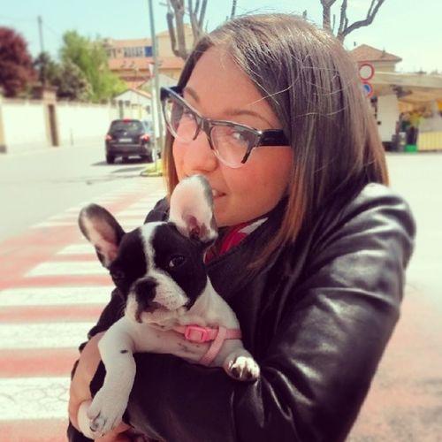 Puppy Bulldogfrancese Frenchbulldog Doggy mirtilla miumiu miumiuglasses ♥