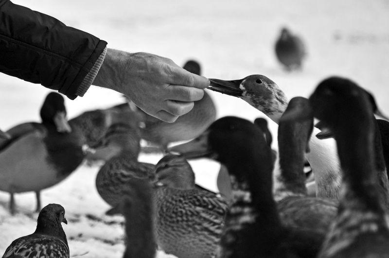 Cropped hand of man feeding bird outdoors