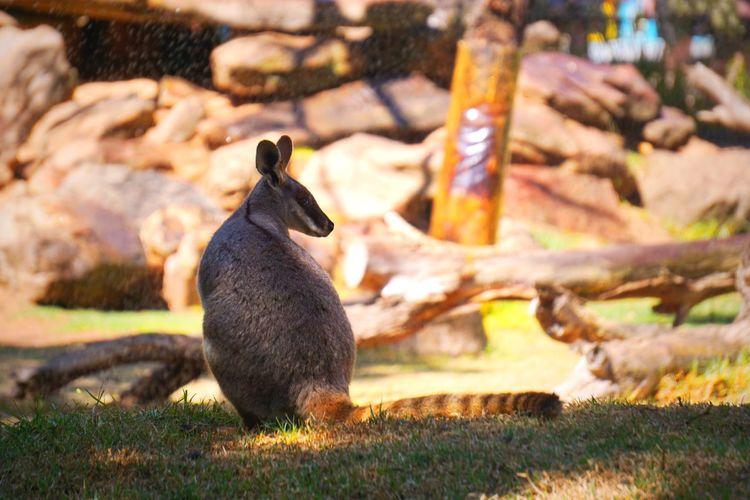 EyeEm Selects Animal Themes Animal Animals In The Wild Vertebrate Animal Wildlife One Animal Nature No People Day Grass Mammal Field Sunlight Outdoors