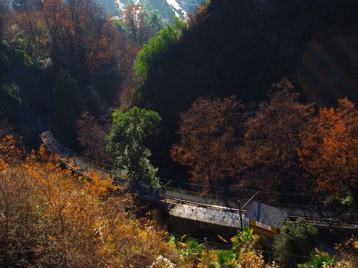 Architecture Autumn Beauty In Nature Day Dizzy Growth Mountain Nature No People Outdoors Plant Rail Railway Station Steep Tree