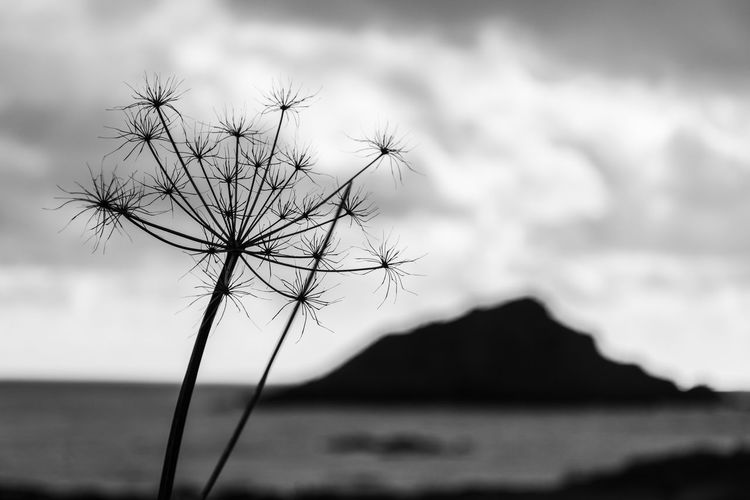 like fireworks Island Landscape_Collection Landscape_photography Nature Nature_collection Nature Photography EyeEm Nature Lover Eye4photography  EyeEm Best Shots Beach Beachphotography Beach Photography Beauty Of Decay Landscape On The Beach Devon Blackandwhite Black And White Bw_collection Silhouettes Seedhead Water Sea Sky Close-up
