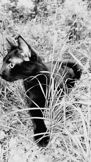 BLackCat Blackandwhite Photography Nature Cat Franky Boo MrFranky Finding New Frontiers Adapted To The City