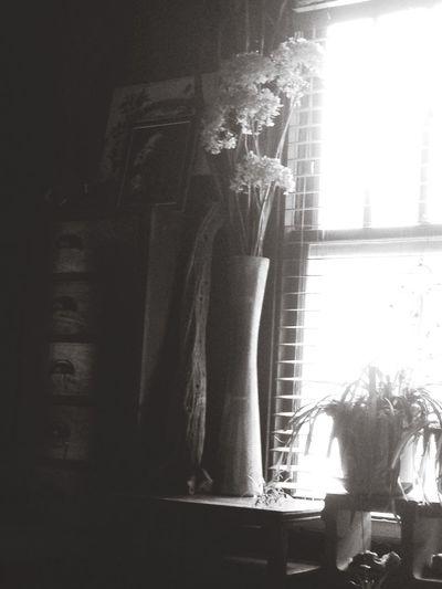 Window Sunshine Sunshine Blackandwhite Black And White Black & White Faded Faded_world