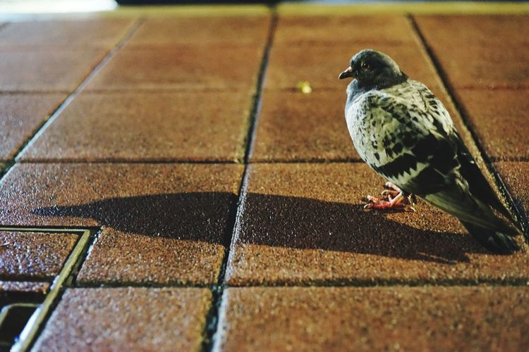 Close-up of bird perching on tiled floor