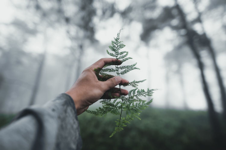 Cropped hand of person holding leaves against trees