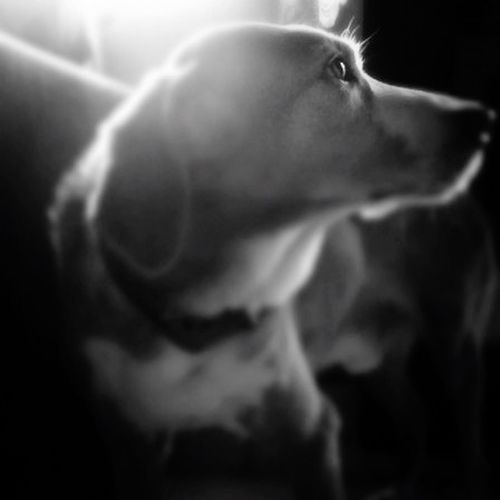 """If I could be half the person my dog is, I'd be twice the human I am"" - Charles Yu"
