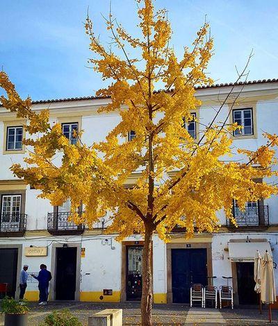 Nature Natureza Naturelovers Leafs Yellow Tree Colors Colorful Cores Autumn Winter Bluesky CeuAzul Unescoworldheritagesite