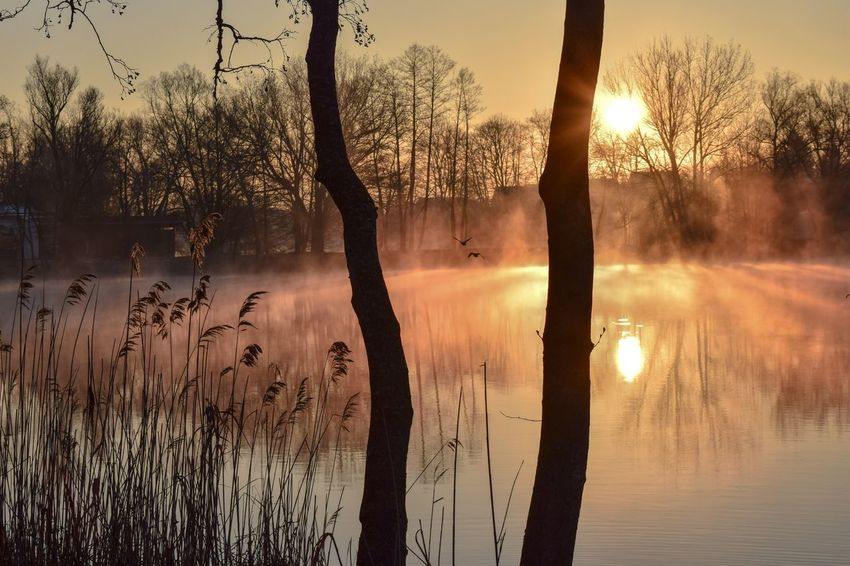 Foggy Morning Over The Water Reflection Sunset Lake Tree Nature Sun Water Sunlight Landscape ScenicsColor Of Nature Power Of Nature Beauty In Nature Tranquility Reeds At The Lake Lake View Silhouette Sunrise