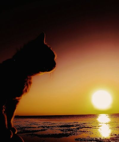My lovely cat Sun Over The Sea Beach Time Sea Water Lovely Cat 😻 Pets Photography Domestic Animals Domestic Cat Cat Cat Face Cats Of EyeEm Cat Lovers Animal Backgrounds Animal Theme One Animal Cat Over The Sea Cats Of EyeEm Cat Looking Across Water Cat And Sea Cat And Sunset Sea_collection Sea And Sun Sea And Sunset Beauty In Nature Sunset Sea Water Beach Heat - Temperature Outdoors Nature