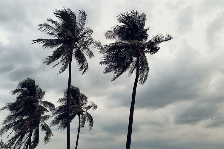 Coconut Trees The Places I've Been Today Taking Photos From My Point Of View Just Another Day Windy Clouds & Tree Clouds And Trees Natures Diversities The Great Outdoors - 2016 EyeEm Awards