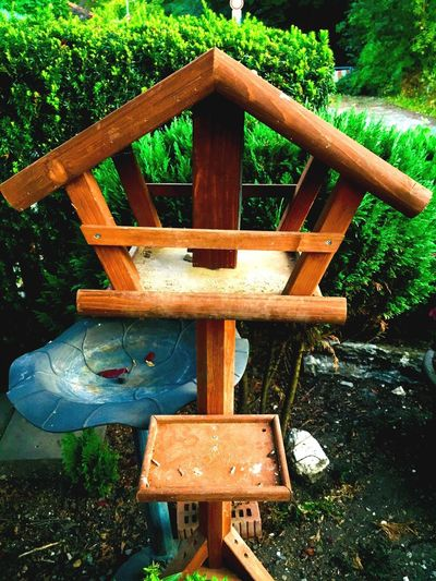 Birdhouse Plant Wood - Material Tree Day No People Nature Park Outdoors Land Design Green Color