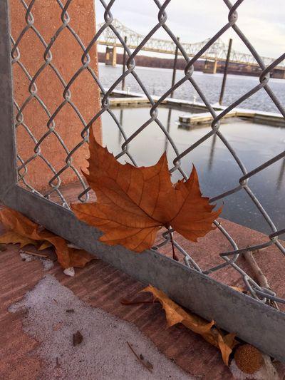 Close-up of autumn leaf against sky