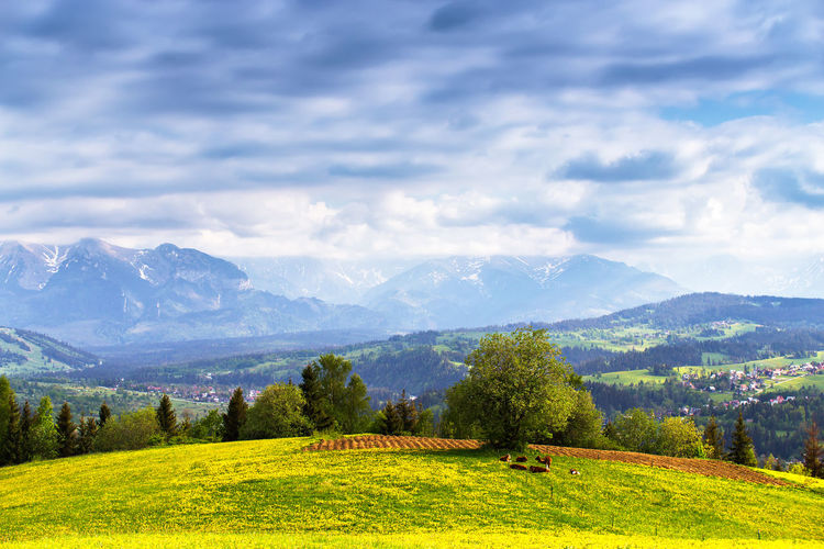 Poland Tatra Mountains Beauty In Nature Cloud - Sky Environment Field Grass Green Color Idyllic Land Landscape Mountain Mountain Range Nature No People Non-urban Scene Outdoors Plant Range Scenics - Nature Sky Tranquil Scene Tranquility Tree