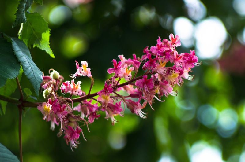 Beauty In Nature Blooming Branch Close-up Day Flower Flower Head Focus On Foreground Fragility Freshness Growth Leaf Nature No People Outdoors Petal Pink Color Plant Springtime Tree