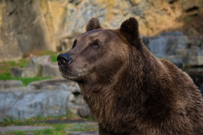 Bear Streamzoofamily EyeEm Masterclass Animals