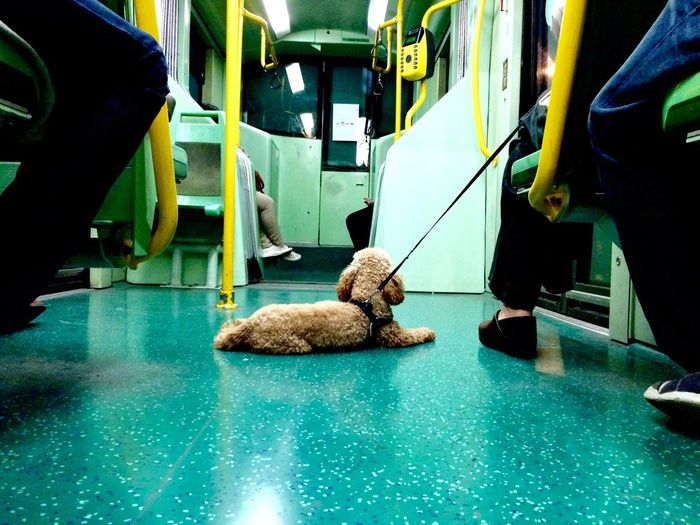 Dog With Low Section Of People Traveling In Train