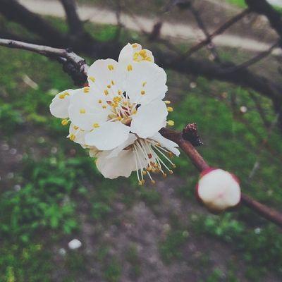 spring finally Localsmd Chişinău Moldova Primavara flori
