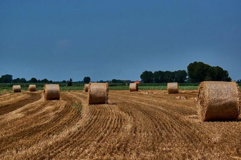 Hay bale fields