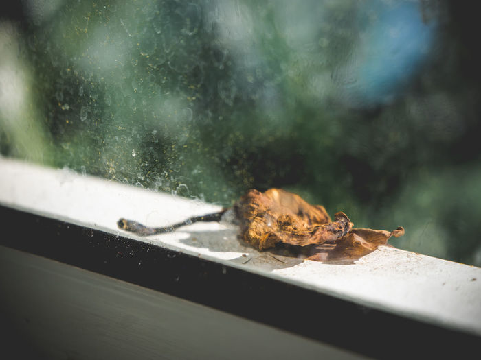 Fallen leaf on the of the window. Nature Day Close-up Falls Season  Lonely Loneliness Sunlight Morning Fallen Brown Dry Leaf