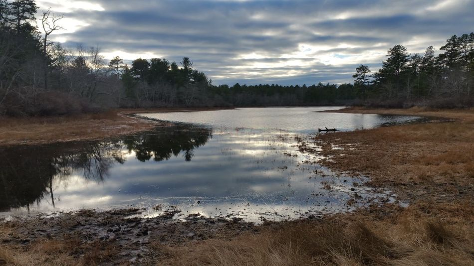 Three-cornered Pond in the Pine Barrens at Myles Standish State Forest Plymouth Massachusetts Taking Pictures Loving Life  Natural Beauty Nature Photography Naturelovers Showcase: January