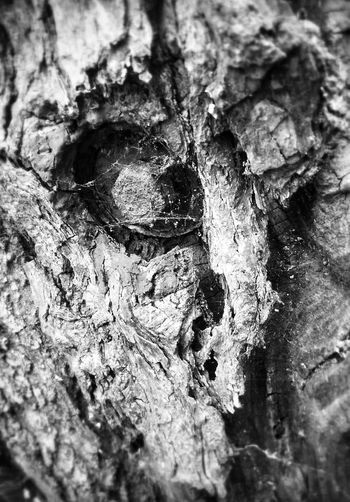 one of my hiddenfaces collection. .. Hiddenfacesbykittyfischer NEM Black&white Connected With Nature Art
