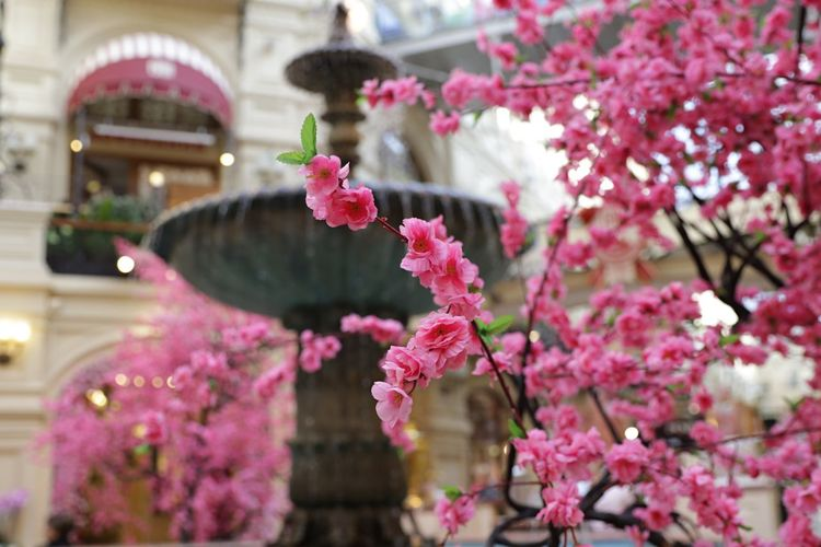 сакура тц торговыйцентр Гуммосква ГУМ фонтан Flower Pink Color Growth Fragility Beauty In Nature Freshness Springtime No People Tree Focus On Foreground Low Angle View Close-up Day Nature Branch Plant Building Exterior Blooming Outdoors Petal