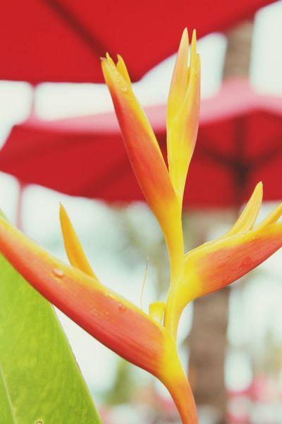 EyeEm Selects Flower Head Flower Red Petal Springtime Close-up Plant