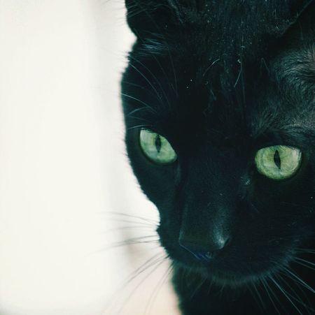 Gato Negro Cats