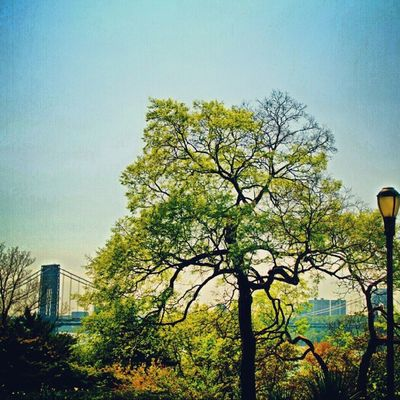 Gosh I think Fort Tryon Trees are Swell Instagramuptown Uptown Washingtonheights Inwood forttryonpark newyorkcity newyork parks