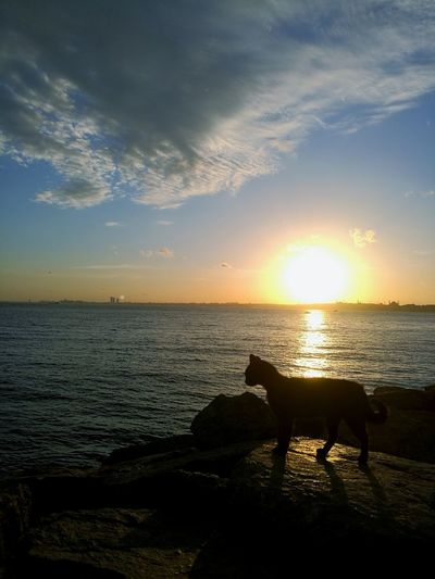 EyeEm Nature Lover EyeEnOnInstagram EyeEm Best Shots EyeEm Selects Cat Sky Sunset Water Sea Sunset Swimming Beach UnderSea Sea Life Sun Sky Horizon Over Water Seascape Coast