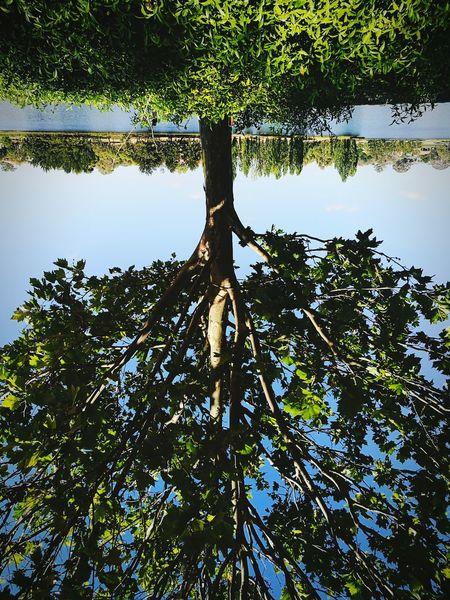 Reflection NatureIsBeauty Wisdom Act Adventures PersonalGrowth