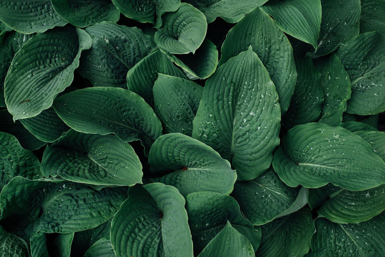 The Great Outdoors - 2019 EyeEm Awards Leaf Backgrounds Full Frame Vegetable Close-up Green Color Plant The Minimalist - 2019 EyeEm Awards