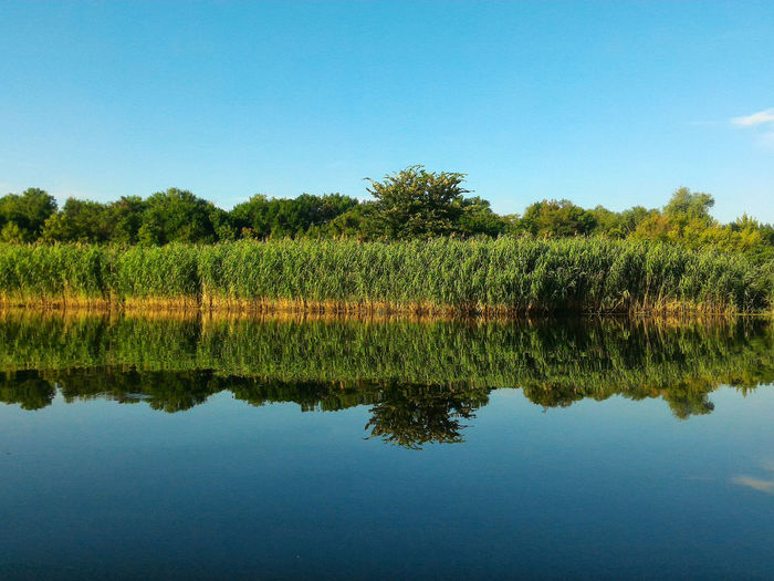 Dnieper smooths Reeds Reflection Calm Water Reflections Morning Colours River View Smooths Nature Photography Reeds Reflection Tree Water Lake Blue Clear Sky Reflection Sky Plant