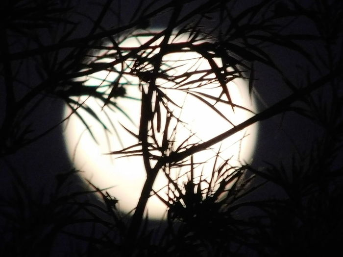 Moon Tree Silhouette Branch Bare Tree Shadow Nature Outdoors Sky Beauty In Nature