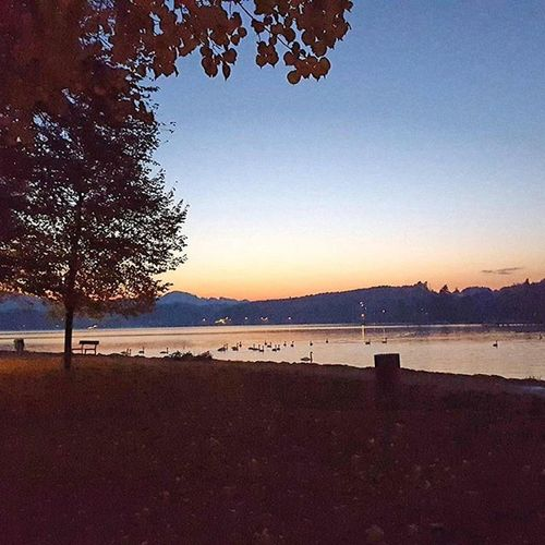 Sunset Lake Attersee Seewalchen Beautiful Weather Fall Swans View Nicestplace Great Time Cold Wind Nature