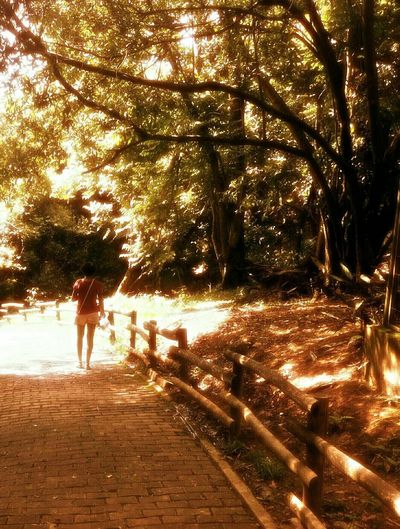Nature Sunlight Women Beauty In Nature Outdoors Shadow Tree Day Paint The Town Yellow EyeEmNewHere